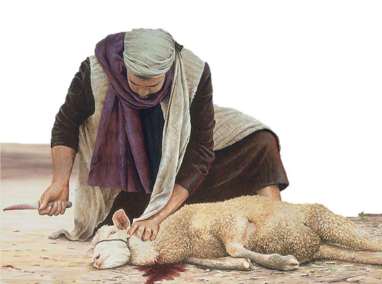 lamb-sacrifice