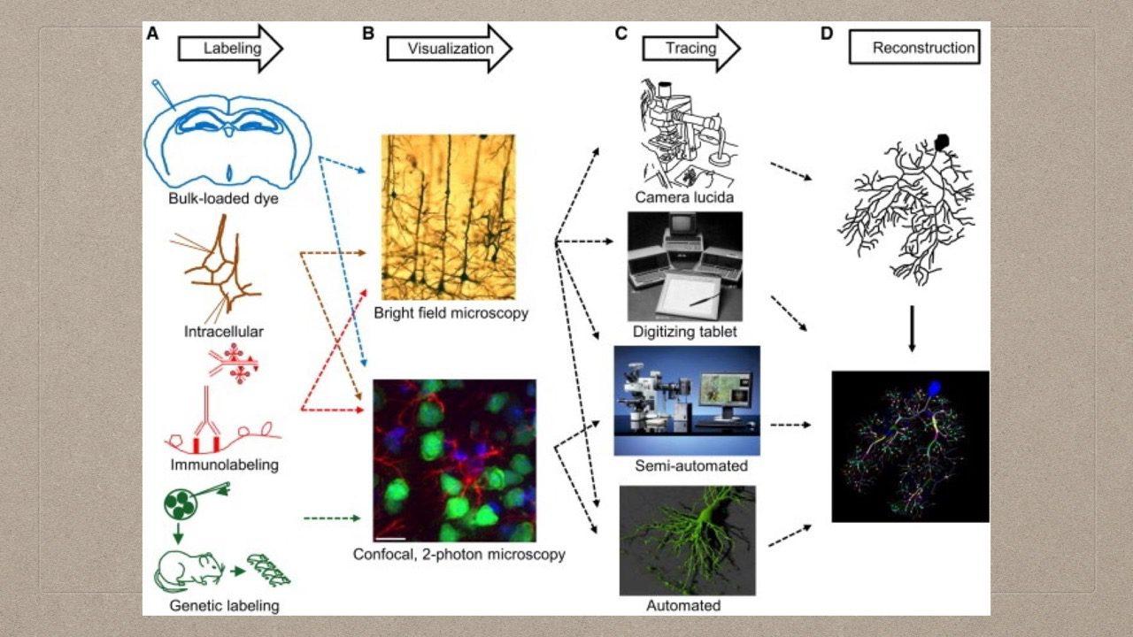 05-05-Process of Neuronal Modeling