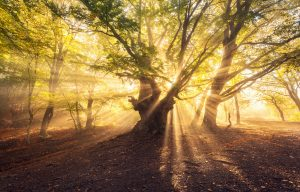 Magical old tree with sun rays in the morning. Forest in fog. Colorful landscape with foggy forest gold sunlight green leaves at beautiful sunrise. Fairy forest in autumn. Fall woods. Enchanted tree