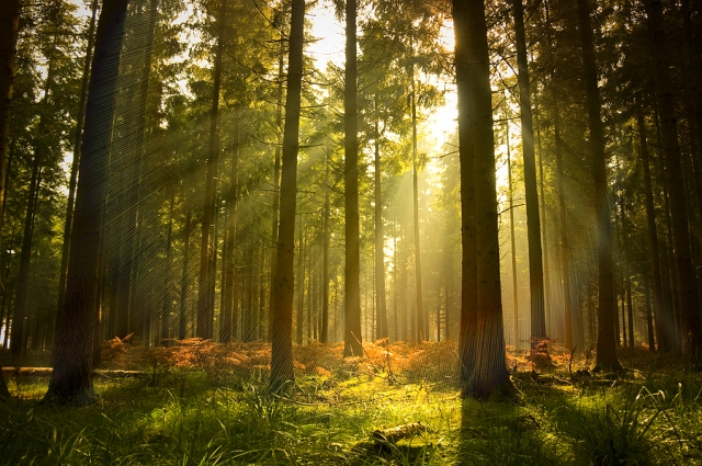 bigstock_Beautiful_Forest_10447586