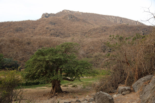 Foliage - Khor Kharfot