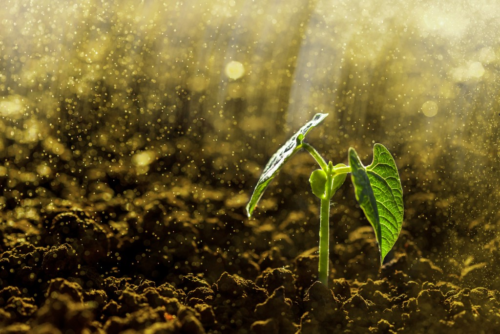 The god seed our prospects meridian magazine for Things in soil