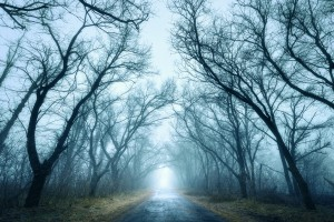 Mysterious dark autumn forest in green fog with road trees and branches . Morning in Crimea