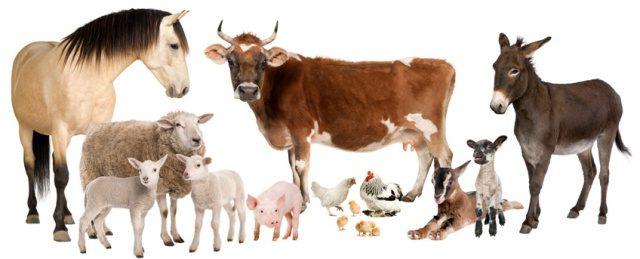 #1 - 'Farm Animals