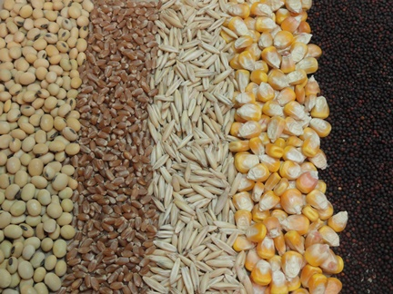 #2 - Grains for animal feed