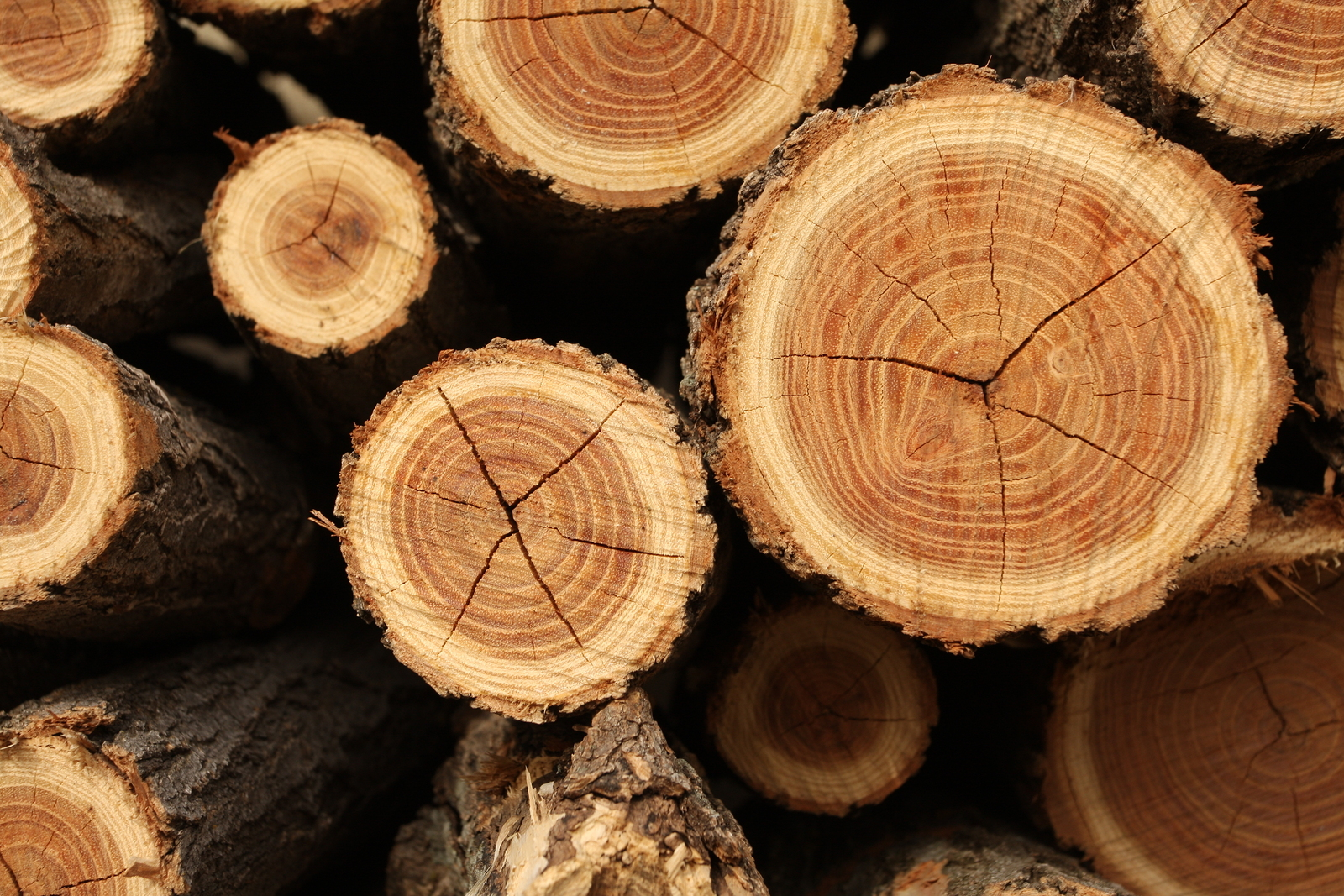 closeup photos free texture picture tree public rings photograph
