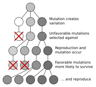 2 - Mutation and selection
